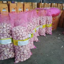 L'écart de gingembre frais et l'ail, 40 pieds contenant de l'ail, peler l'Ail frais pour le marché mondial