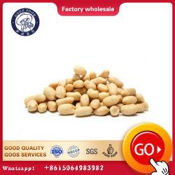Arachidi grezze nocciolo e nocciolo imbiancato dell'arachide all'ingrosso dell'arachide da vendere