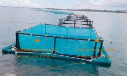 HDPE Pez Flotante Jaula para la acuicultura comercial de alevines de redes de cultivo de tilapia