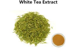 30%のポリフェノールのはしかを扱う白い茶エキス