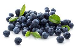 Beliebte Kräutermedizin der Europäischen Heidelbeere Extrakt