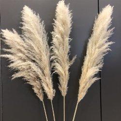 Boho decorazione nuziale grande peluche conservati Pampas Tall Phragmites naturale Beige Fiore secco Reed Pampas Grass