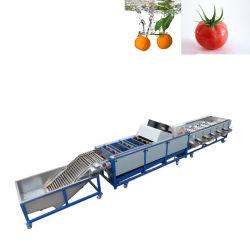 Obst- und Gemüsewaschen/Wachsen/Gradieren/Sortieren/Verarbeiten von Maschinen zum Verkauf