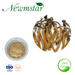 중국의 전통 의약 Immunity Cordyosps Extract/Opiocordyceps Sinensis 개선