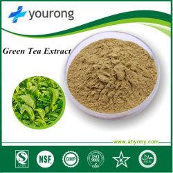 工場供給の高品質の緑茶のエキス、ポリフェノール20-98%、反Oxidiant EGCG 15%-98%
