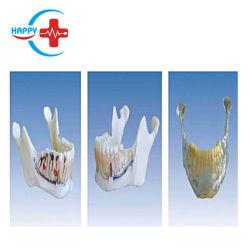 Hc-S427 прав Mandibular модели зубьев анатомические модели стоматологических модели обучения