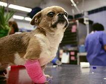 FDA keurde het Beste Veterinair Verkopen/Elastisch Samenhangend Verband Vet/Dog/Animal/goed