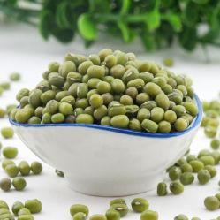 질 농업 유기 말린 녹색 녹두