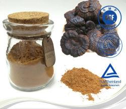 Potenciador de la inmunidad de setas Reishi Rojo Linzhi extracto herbal extraer un 10%~50% de los polisacáridos en polvo extracto.