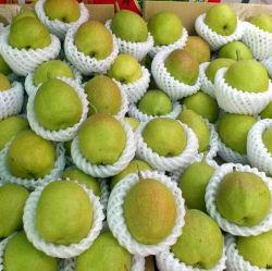 Pera fragrante rossa fresca (pera di hongxiangsu)