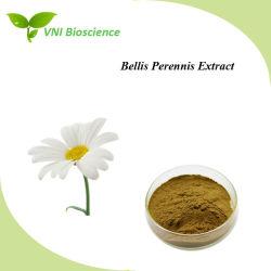 ISOSGS bestätigte Gänseblümchen-Blumeauszug/Bellis Perennis Auszug