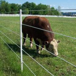 Cerca de la granja eléctrica Polywires Hilo de ganados y animales de compañía Esgrima