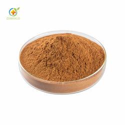 Polvere dell'estratto dei semi di Chia del rifornimento del fornitore migliore