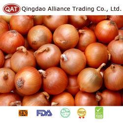La nouvelle récolte d'oignons jaunes fraîches chinois