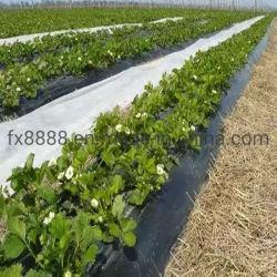 Tessuto Anti-UV di agricoltura del Nonwoven 3% di Spunbond dell'animale domestico