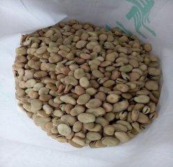 Un grade de récolte fraîche fèves séchées
