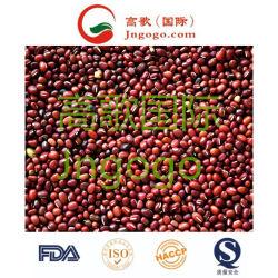Export-neue Getreide-Nahrunghohe gute Qiality rote Bohne