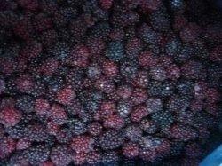 IQF congelados orgânicos Black Berry