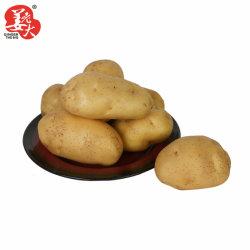 Cosecha Nueva China seleccionada Super patata fresca