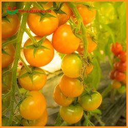 Хорошее соотношение цена Multi-Span PE/Po пластиковую пленку с выбросов парниковых газов в сельском хозяйстве гидропоники системы для огурца и помидора/// салатов перец