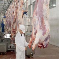 La viande de boeuf de vache de l'Abattoir/abattoir Bovins/Auto ligne de conception et de la machinerie