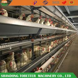 최고 가격 Quility 층 감금소 암탉 계란 가금 농장 가축