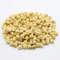 Meilleur prix des fruits déshydratés Snack graines de lotus frit vide