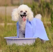 良質ペット犬の子犬の超吸収性の浴室タオル携帯用強い パーカパー多目的ペットタオルシャモア PVA テクスチャーソフト入り