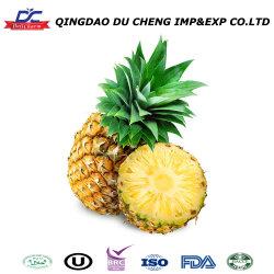 Alimentação de fábrica delicioso estilo secas puros e naturais a ananás ananás secos Conservas de frutas