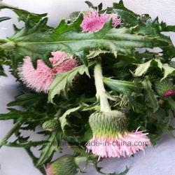 Flores frescas cortadas rosa flor de piel para wholesales