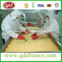 Hochwertige IQF gefrorene Süße Mais mit keiner GVO