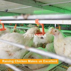 Ferme et durable de la volaille Les mamelons potable automatique pour le poulet