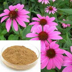 抗菌のための1~4%年のCichoricの酸のEchinaceaのエキス