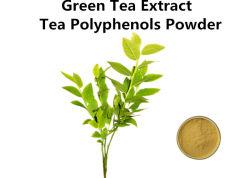30%-98% polyphénols Extrait de thé vert en poudre pour la perte de poids