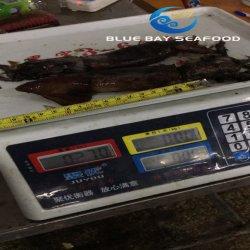 El tamaño 70-150g al por mayor negro marisco congelado Calamar para cebo