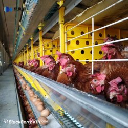 Structure légère en acier préfabriqués galvanisé Design ferme avicole de poulet La construction de bâtiments de délestage