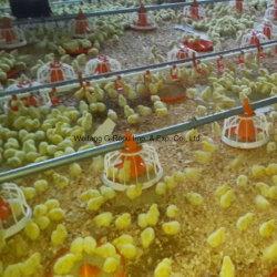 Различных птицеводства оборудование и оборудование для производства мяса птицы