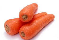 2019 La Cosecha roja fresca zanahoria