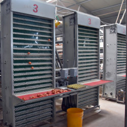 نظام Cage لطيور الدجاج مع ماكينة أوتوماتيكية بالكامل