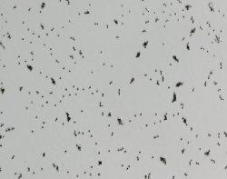 De color blanco de falso techo de fibra mineral