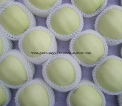 中国の新しい卸し売り新しい緑の金Jinshuai Apple