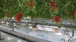 Овощи воды культуры или гидропоники высевающего аппарата