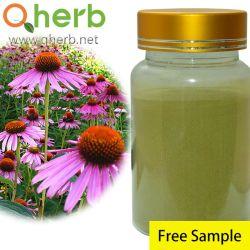 Alimentation d'usine Echinacea purpurea Extract