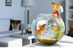 둥근 유리제 물고기 Bowl/Acrylic 어항 아크릴 수족관