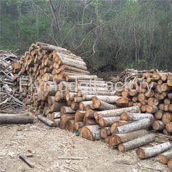 Balsabaum-Holz-Ecuador geklebtes Block-Balsabaum-Holz