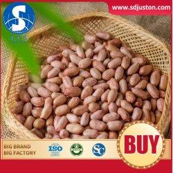 Crop fresco eccellente grado di arachidi rivestite in cioccolato