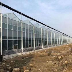 農業の大きいガラス情報処理機能をもった温室6メートルトマト、メロン、コショウおよび他に野菜の植わることのための高い12メートルの幅適した