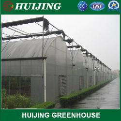 Plastikfilm-grünes Haus/Glas des Polycarbonat-Blatt-PC/Hydroponic Venlo/Gewächshaus für die Landwirtschaft von Landwirtschaft des Gemüses/der Blumen/Tomate/Garten