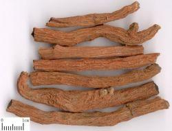 Extrait de racine Cryptotanshinone Salvia extrait de racine de 98 % Danshen 35825-57-1