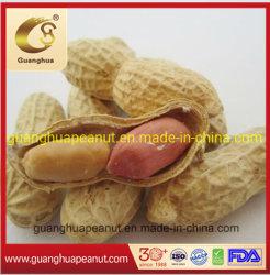 Nova cultura torrado e salgados com casca de amendoim delicioso Luhua Haihua saudável
